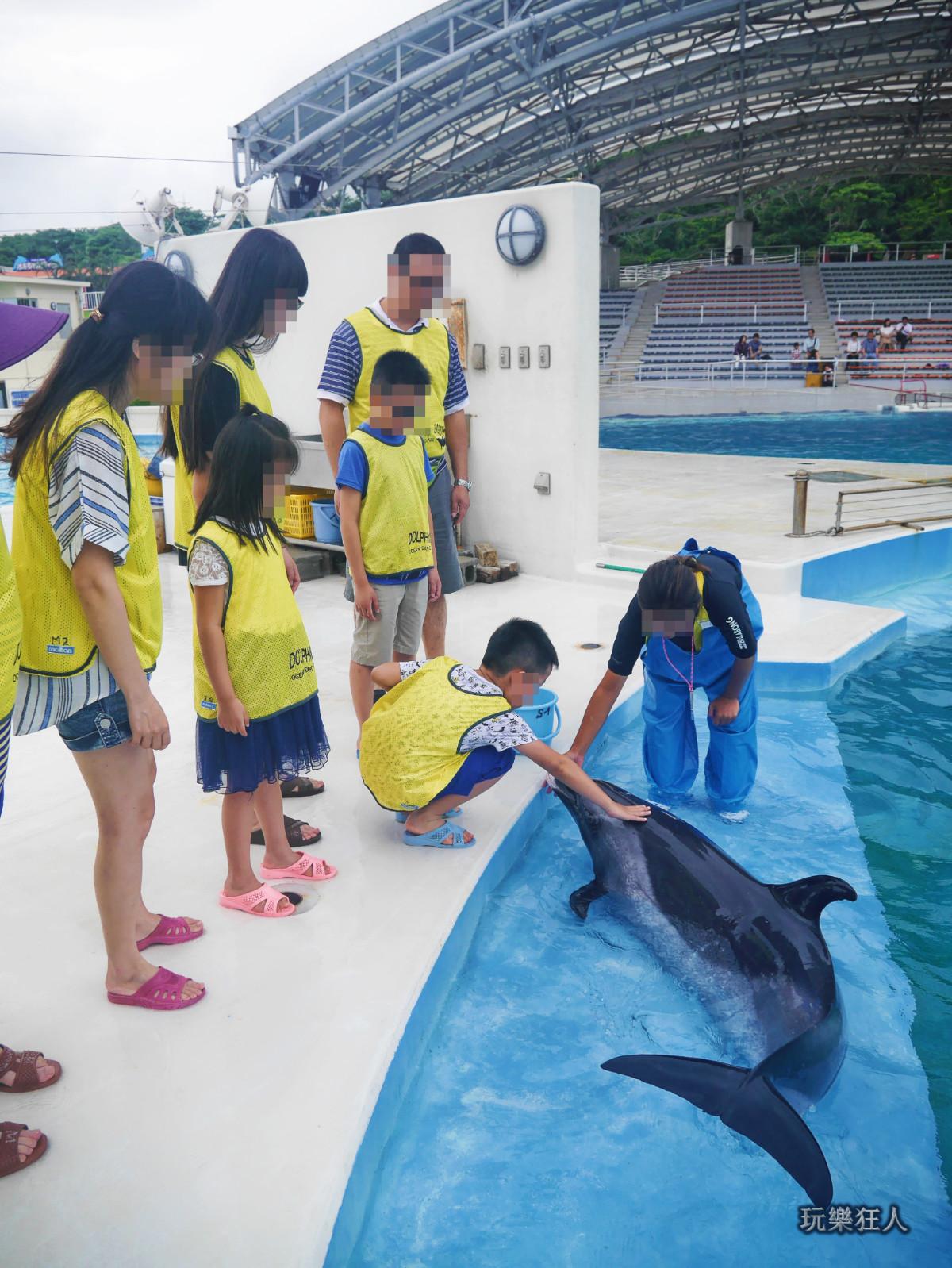 『海洋博公園』海豚接觸體驗-觸摸海豚