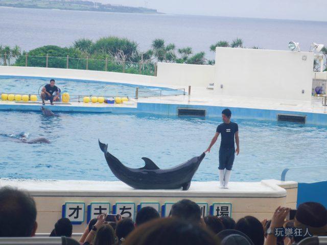 『海洋博公園』海豚劇場-微笑曲線