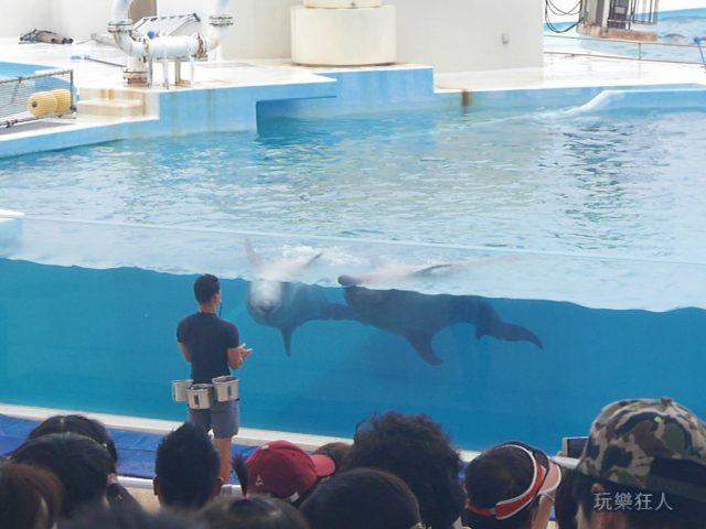 『海洋博公園』海豚劇場-拍手