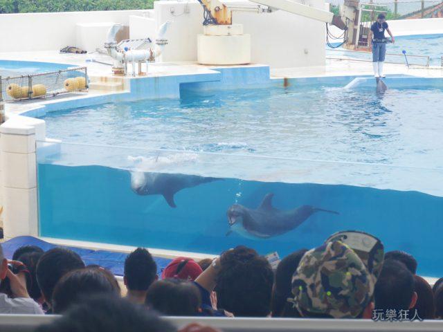 『海洋博公園』海豚劇場-氣孔吐氣