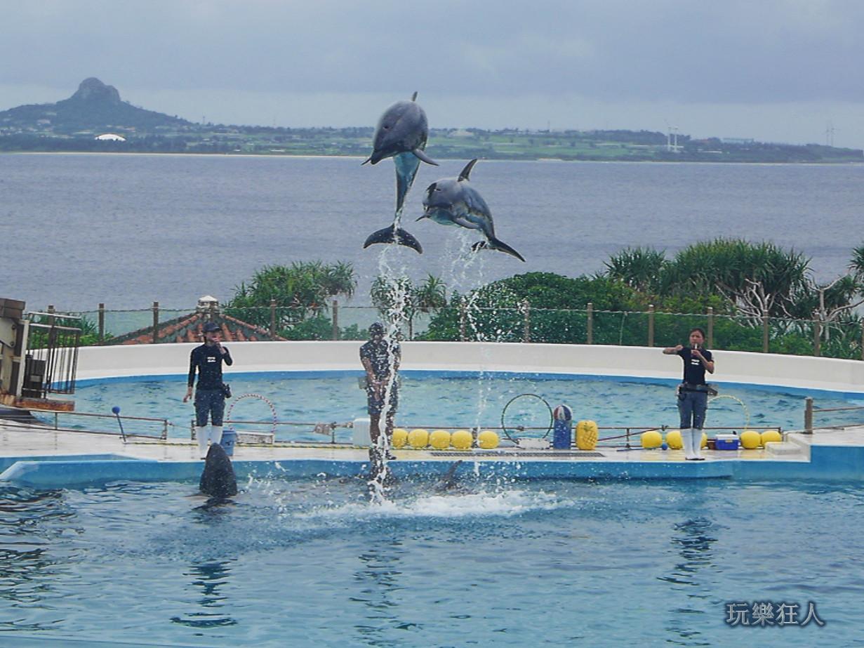 『海洋博公園』海豚劇場-跳躍