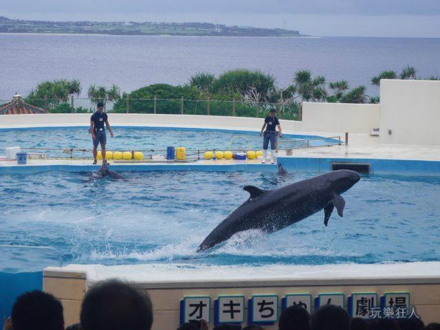 『海洋博公園』海豚劇場-魚躍