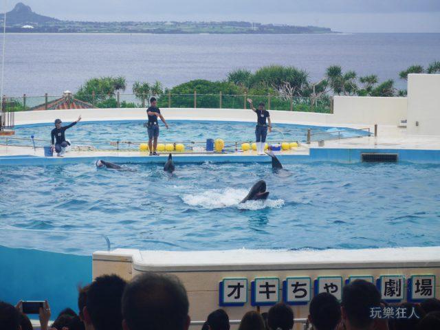 『海洋博公園』海豚劇場-露齒