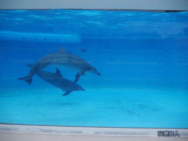 『海洋博公園』海豚潟湖