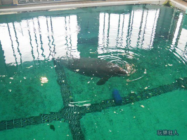 『海洋博公園』海牛館-水上觀察