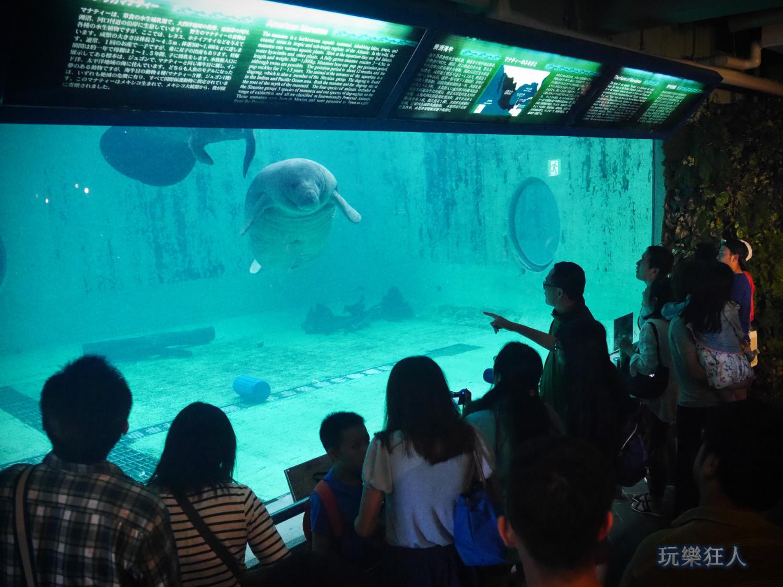 『海洋博公園』海牛館-水下觀察室