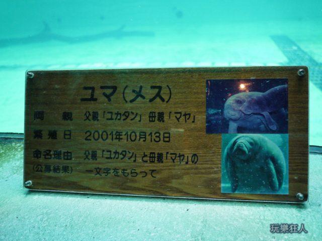 『海洋博公園』海牛館-海牛資料