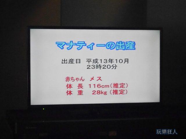『海洋博公園』海牛館-海牛出生影片