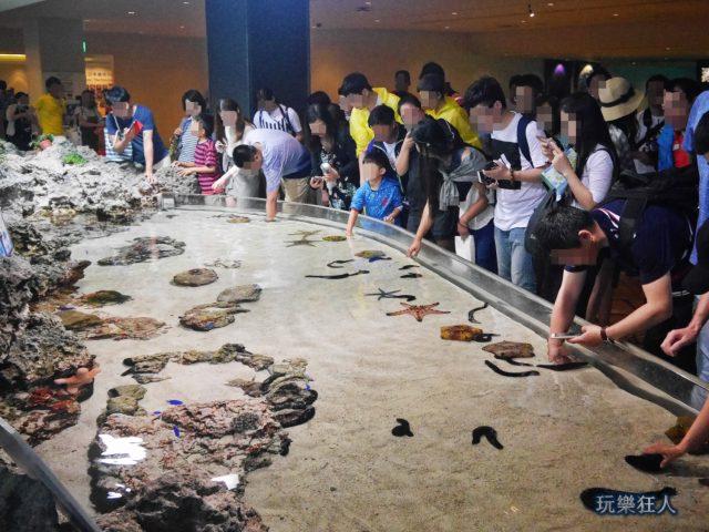 『海洋博公園』沖繩美麗海水族館-觸摸池