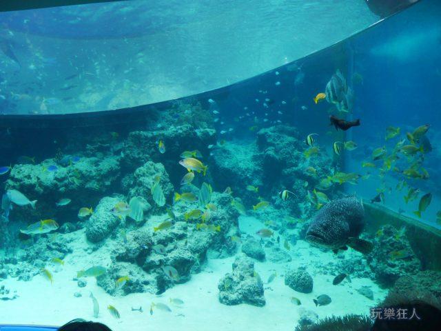 『海洋博公園』沖繩美麗海水族館-水族箱