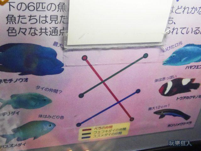 『海洋博公園』沖繩美麗海水族館-連連看