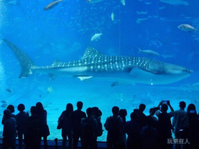 『海洋博公園』沖繩美麗海水族館-世界第二大的水槽