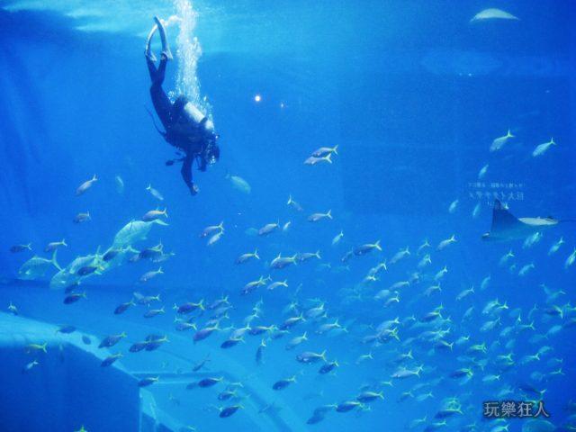『海洋博公園』沖繩美麗海水族館-潛水夫