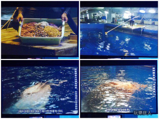 『海洋博公園』沖繩美麗海水族館-鯨鯊進食