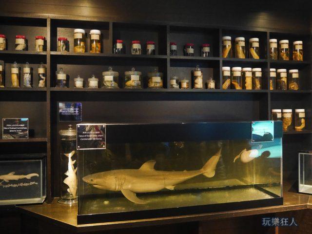 """『海洋博公園』沖繩美麗海水族館-鯊魚研究室""""鯊魚標本"""""""
