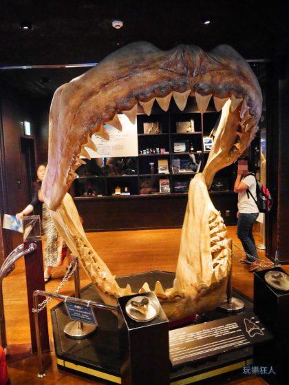 """『海洋博公園』沖繩美麗海水族館-鯊魚研究室""""巨齒鯊"""""""