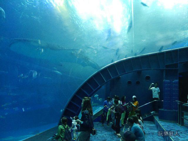 『海洋博公園』沖繩美麗海水族館-大水槽