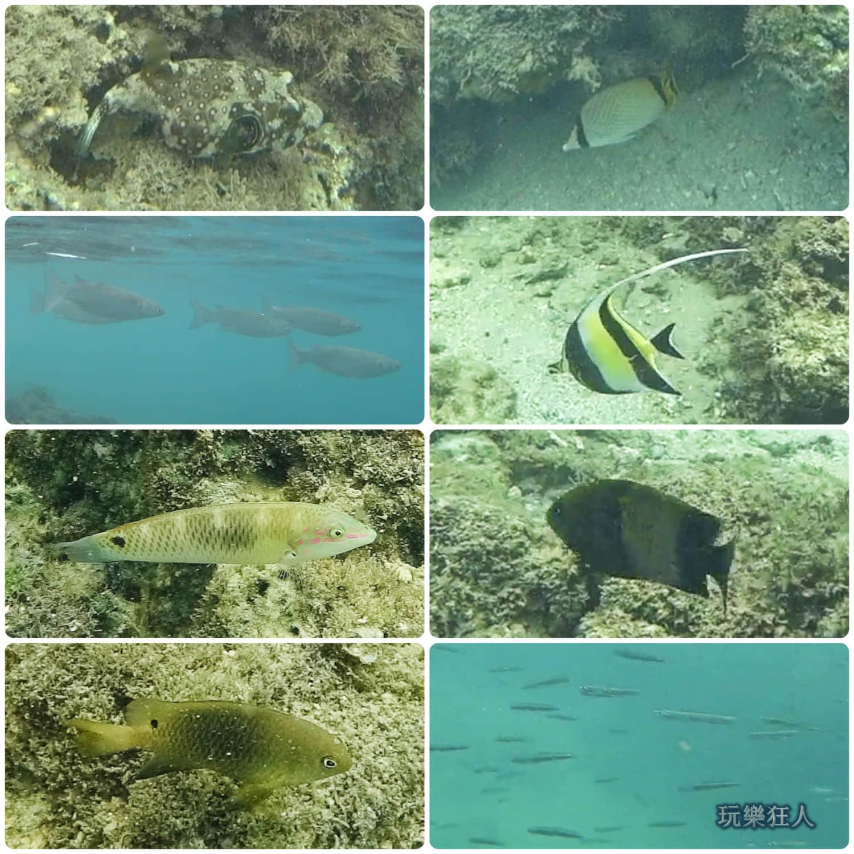 「小巴里島岩」浮潛
